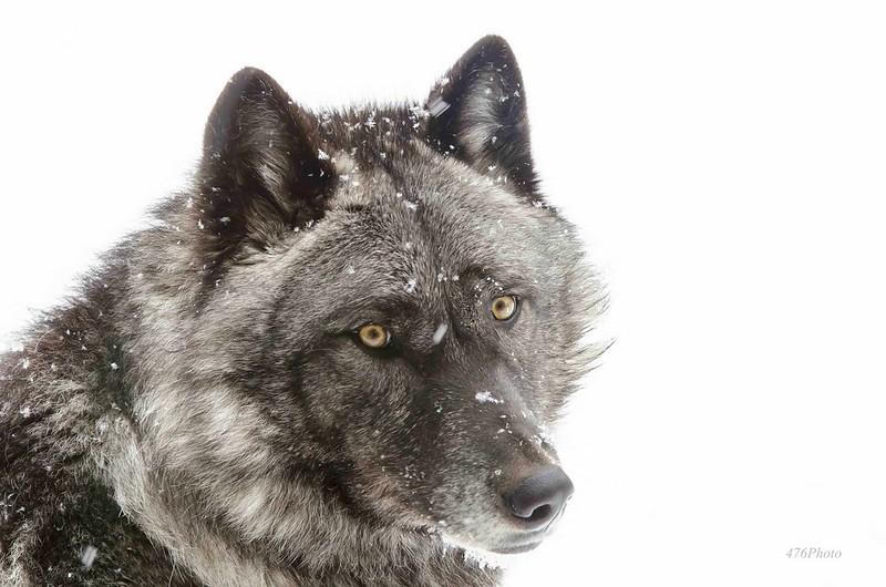 Luna, Snowfall
