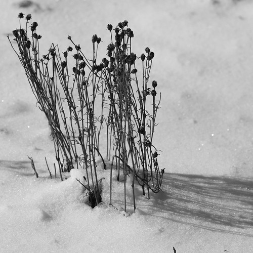 snow newmexico sage nationalforest taos sagebrush carsonnationalforest