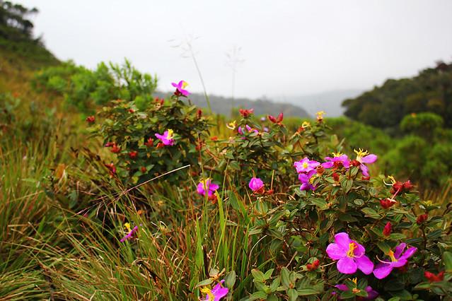 Flora of Horton Plains National Park