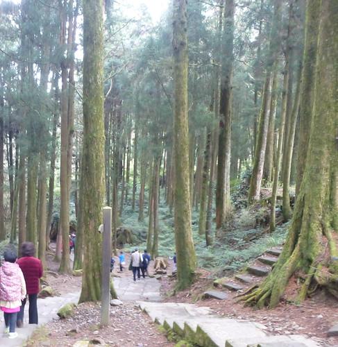 Ta-Alishan-Parc-Marche (10)