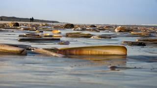 Juist 2007 - Muschelmeer