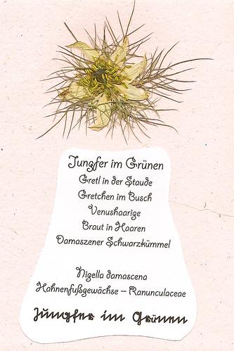 Jungfer im Grünen Nigella damascena Schwarzkümmel Foto Brigitte Stolle Mannheim