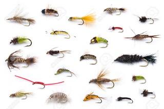 Types of flies