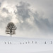 Invierno by cortu
