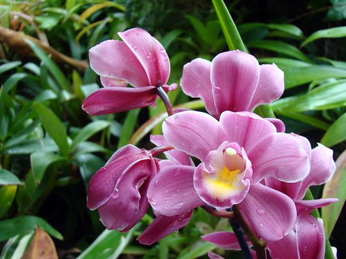 Orchid and Tropical Bonsai Show - March 1st 2015