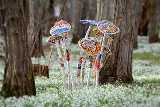 Les fleurs de laine des enfants poussent parmi les perces neige  il y en a tellement que me voilà percher sur la pointe des pieds pour ne pas les abimer