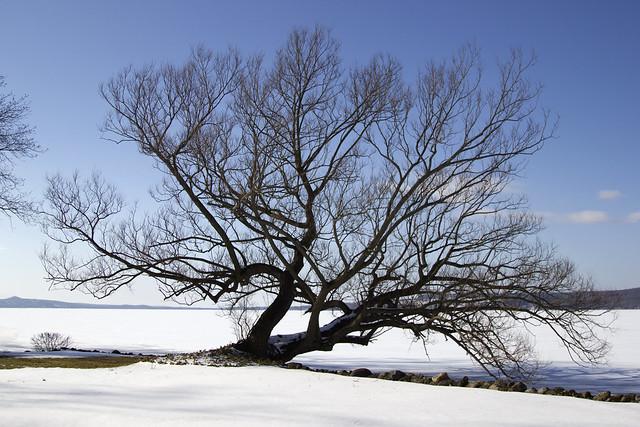 IMG_8227 - Tree by lake - Edited