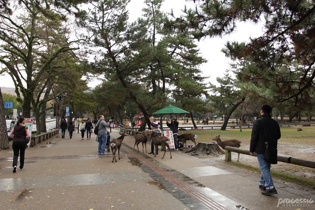 Nara_0019