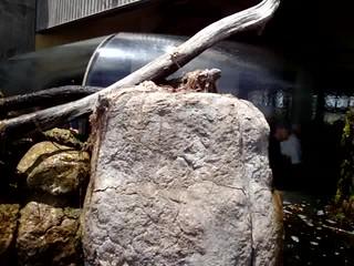 DSC28284, Monterey Bay Aquarium, California, USA