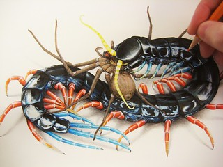 Scolopendra 'Malaysian Jewel' in the works...