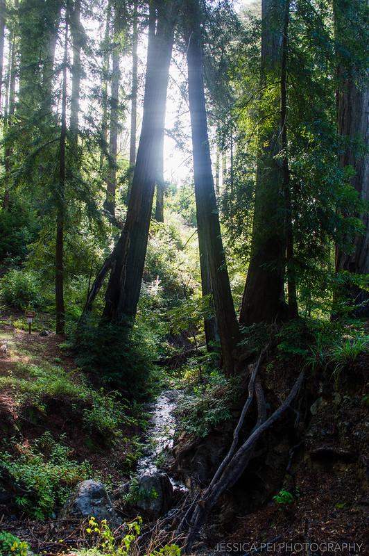 Pfeiffer Big Sur State Park California