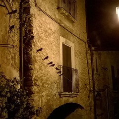 Tutte le sere, fuori la porta di casa #rondini #centrostorico #borghipiubelliditalia  #navelli #laquila #abruzzo #italy
