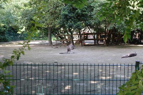M nagerie du jardin des plantes - Zoo jardin des plantes ...