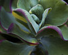 Botanic Gardnes-046