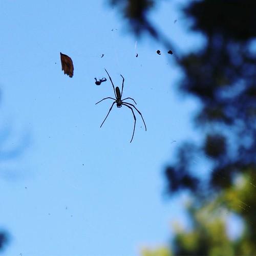 クモがいた。