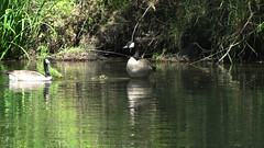 Rogue River Wildlife