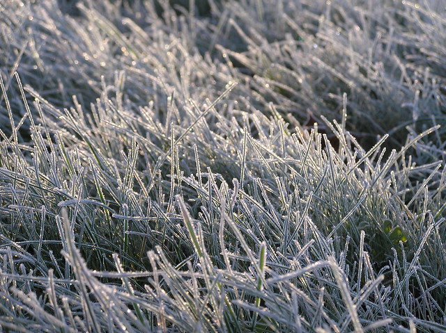 White frost on grass