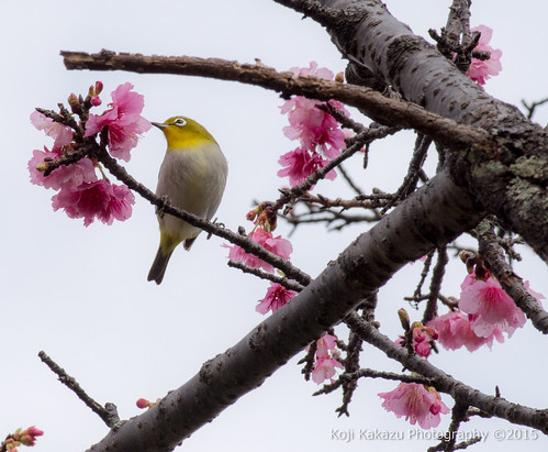 与儀公園 | Naha City, Okinawa 12