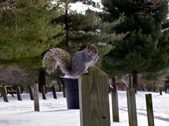 Squirrel says brrr
