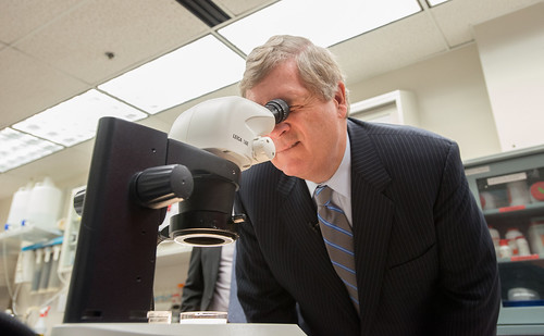 Secretary Vilsack looking into a microscope.