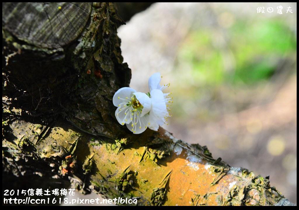 2015信義土場梅花DSC_9340