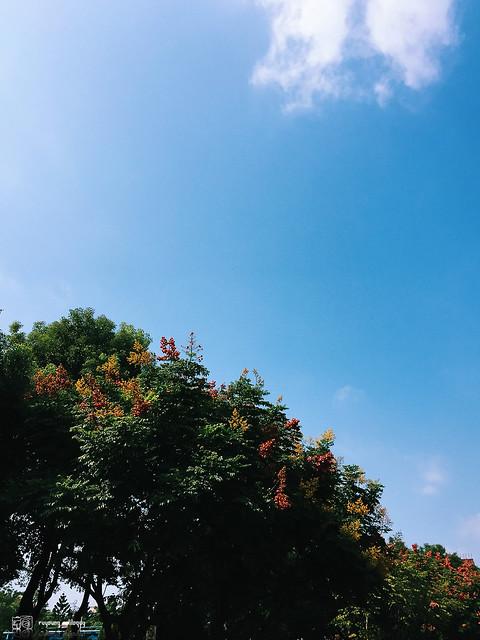 iPhone6_Plus_Photo_11