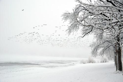 a bunch of birds