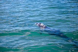 Dolphin. Shot @ Sian Ka'an, Quintana Roo, Mexico. Foto: Stephan Benz