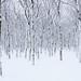 Winter Silence by Erik Johnson Photography