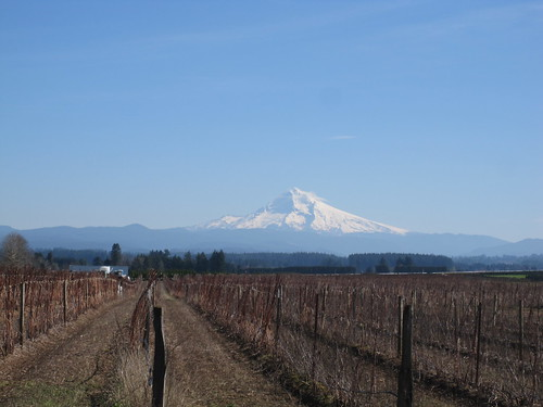 "The ob-""Mount Hood from Amisigger Road"" photo"