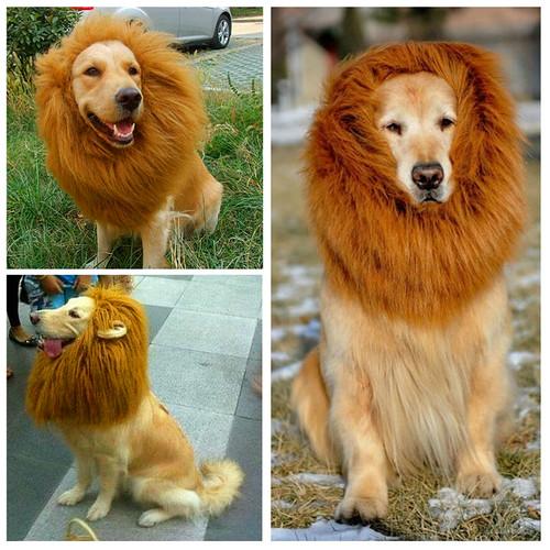 Free-shipping-new-arrival-pet-clothes-font-b-dog-s-b-font-font-b-lion-b