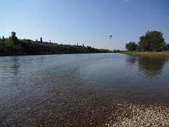 Bow River - Fish Creek PP