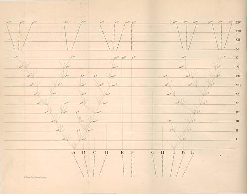 達爾文在物種起源第四章(Natural Selection自然選擇、或天擇)裡的所提供的想像圖示,勾畫出物種在演化史中從祖先到後代的滅絕或延續的可能性。圖片截取自達爾文1859年的物種起源。
