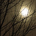 Moon, Early morning Haze_0322 by photoholic1