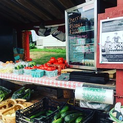 Best #farmstand at #champdalefarm in #bradfordcounty (or maybe #wyomingcounty -it's on the line). Their #freshcorn is hands down, THE best. I can wait to bite that #tomato! #nepa #cornonthecob #tomatoes #discoverpa #naturalpennsylvania #visitpa