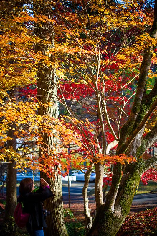 秋を写しとめる