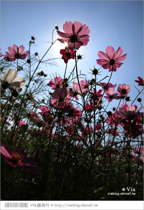 【南新彩繪村】彰化埔鹽/南新立體彩繪村~隱藏版的花海圍繞整村,美景如畫!32