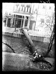 03-01-1949_05832 Boom omgewaaid