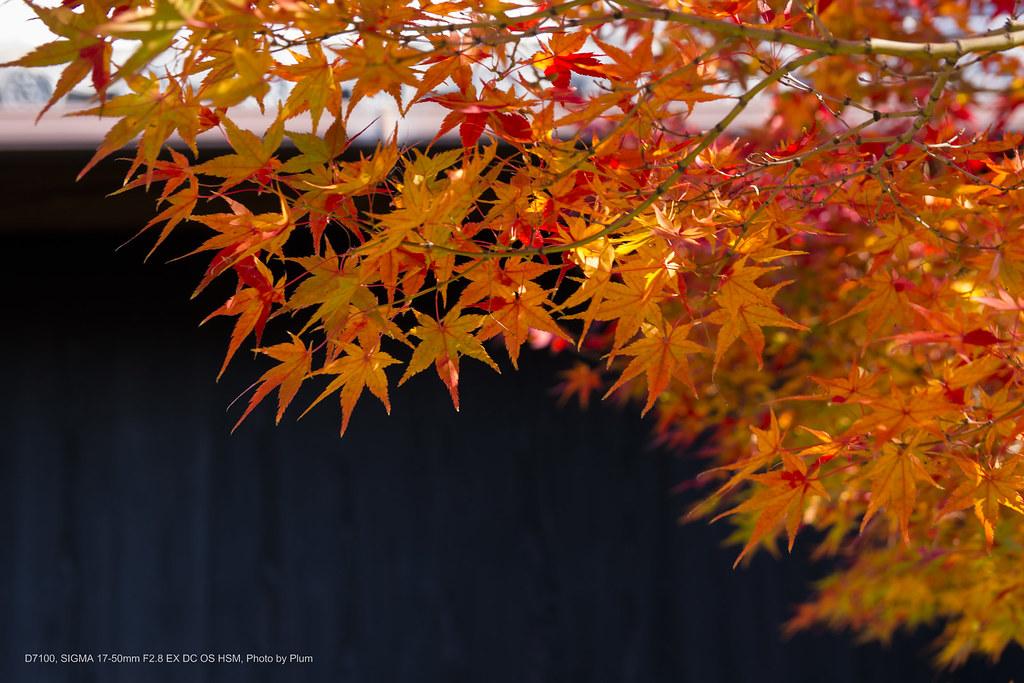 Tokoname Yakimono Sanpomichi-5