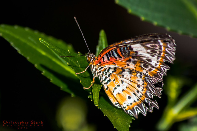 Butterfly Rainforest 2 Flickr Photo Sharing