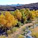 D70s Burro Creek (25)e