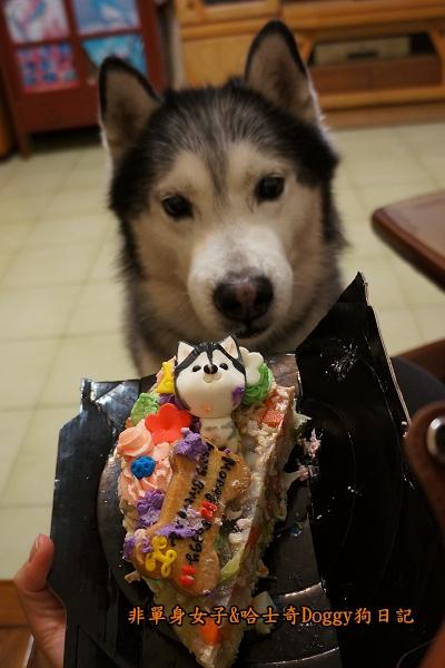 吉快樂寵物蛋糕07