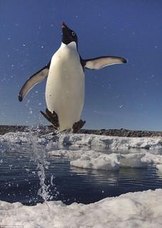 penguin-jump002