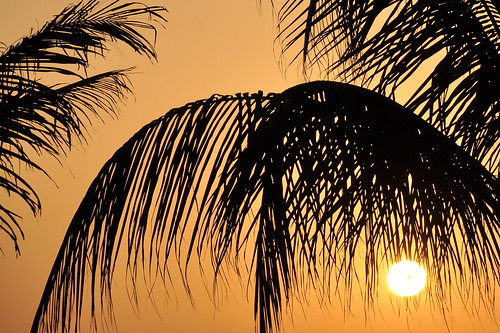 trees light sunset sun nature middleeast palmtrees tropical oman salalah arabianpeninsula