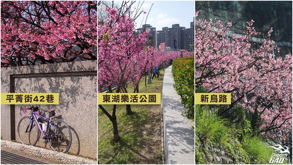 2015大台北賞「寒櫻」三大名所!平菁街42巷、東湖樂活公園、新烏路