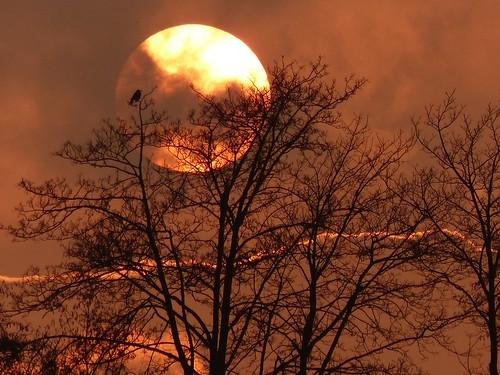sunset bird explore inexplore explore20150126 morethan500favs