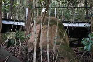 A termite mound