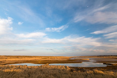 Cley marsh early evening