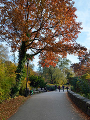 Autumn Path - Ft.Tryon Park