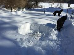 snowshovelling garden IMG_0409